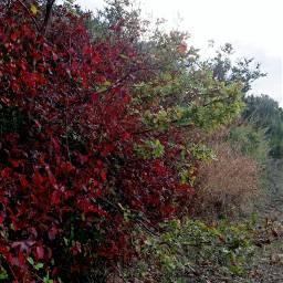 freetoedit leaves bushes fullcolor landscape