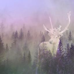 freetoedit deer pinetrees foggy picsarteffects