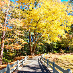 freetoedit fall autumn nature outdoors