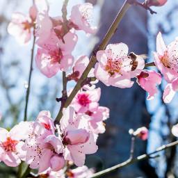 flowers bees sunshine happyfriday freetoedit