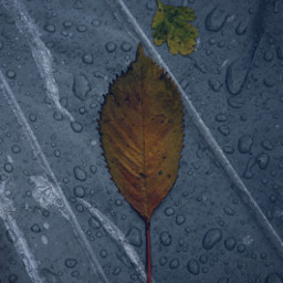 nature leaf waterdrops aftertherain freetoedit