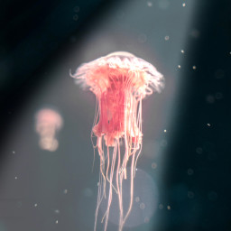 freetoedit lindo fondodepantalla tumblr instagram ircredjellyfish redjellyfish