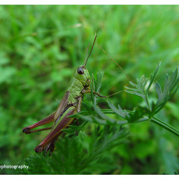 freetoedit followme insect insect_perfection bugs