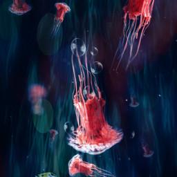 freetoedit jellyfish swim fish coral ircredjellyfish redjellyfish