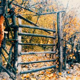 freetoedit atumn tree wood yellow