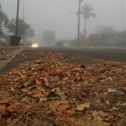 fog way drive autumn