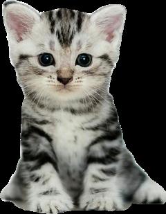 кот котик мило милый животные freetoedit