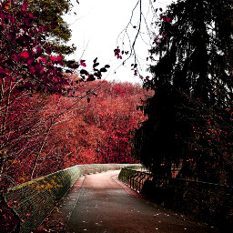 freetoedit autumn pathway bridge trees