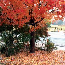 autumnleaf fall redorange leaveschanging freetoedit