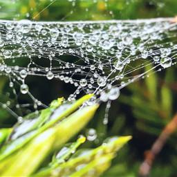 freetoedit spiderweb rain raindrops nature