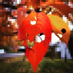 freetoedit leaf pixelart pixel madewithpicsart