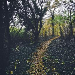 freetoedit trees pathway woods dramaeffect
