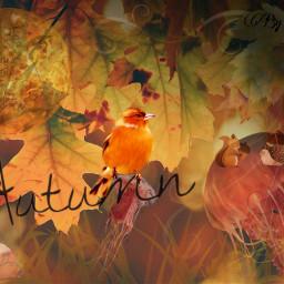freetoedit herfst autumn orange