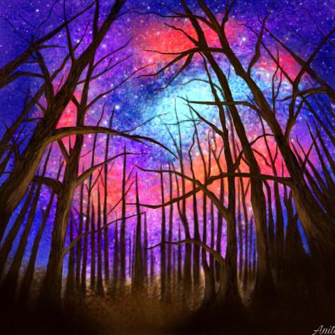#nightforest,#dcnightforest
