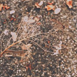 leaf leaves gravel rocks nature freetoedit