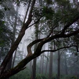 forest freetoedit pcgloomyweather gloomyweather