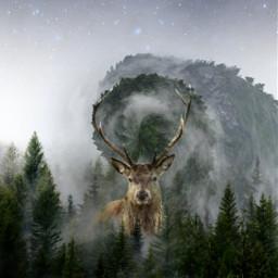 freetoedit tinyplaneteffect pinetrees deer foggy