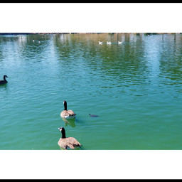 photography beautyinnature reflections ducks&turtle sweetemotions