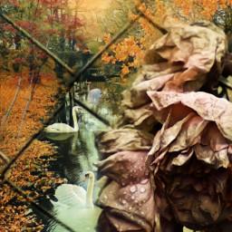 freetoedit myedit doubleexposure autumn landscape