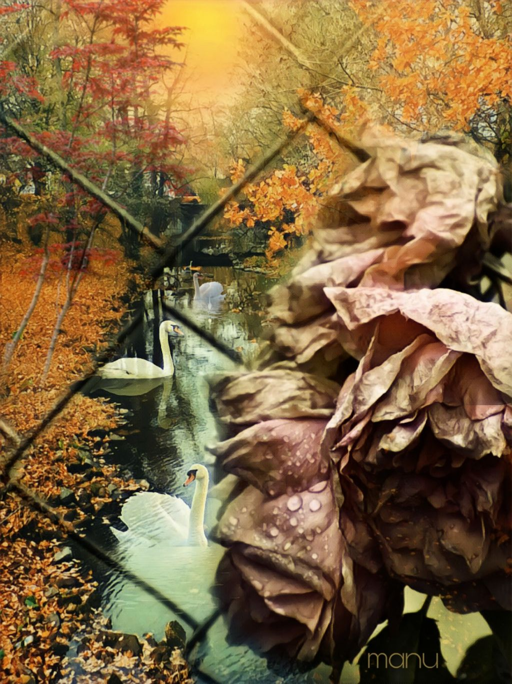 #freetoedit #myedit #doubleexposure #autumn #landscape #flowers #swans #fantasy #imagination #