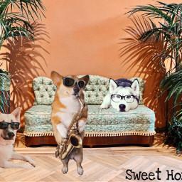 freetoedit dog dogday dogphotography dogprint irccoziness coziness