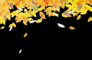 fall leaf leaves leafs freetoedit