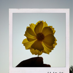 freetoedit flower polaroid