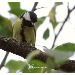 freetoedit followme birds birdsphotography birdsofprey