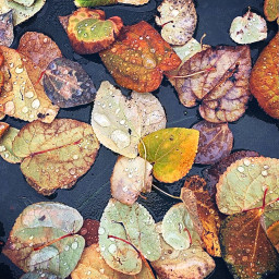lookingdown fallenleaves ontheroad autumnleaves raindropsonleaves freetoedit