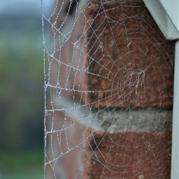 freetoedit coldmorning coldweather spiderweb beautiful