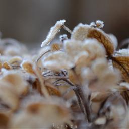 freetoedit coldmorning myphoto kinora loveit