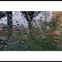 photography beautyinnature sweetemotions rainyday reflections