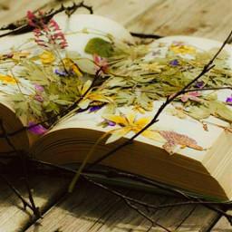 freetoedit top autumncolors autumm leavesfall