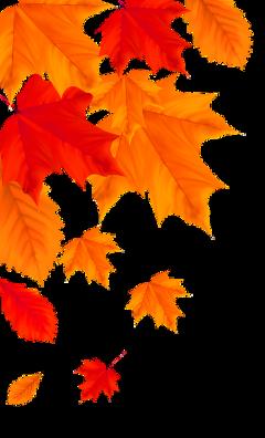 autumn fall leaves freetoedit
