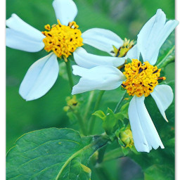 myphotography flowerheads wildflowers weeds leaves