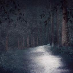 nightforest dcnightforest