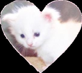 soft edit kitten freetoedit