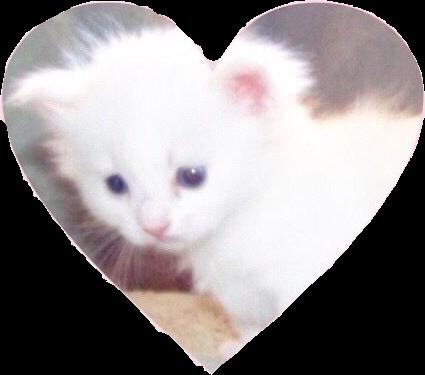 #soft #edit #kitten #freetoedit