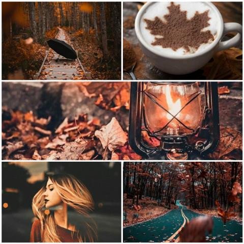 #autumn,#autumnleaves,#autumncolors,#pretty,#warm,#ccautumnmoodboard