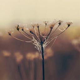 nature autumnmood wildplants raindroplets web freetoedit