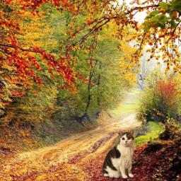 freetoedit road fall autumn nature