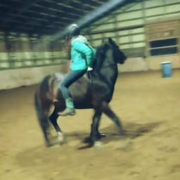 horse gibson lifequote pony barn