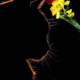 freetoedit cat black flowers bouquet ircflatlay flatlay