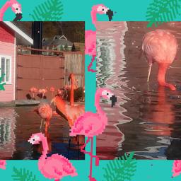 pelicans birds@reneharris birds