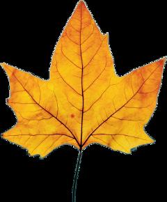 freetoedit feuille leaf dubrootsgirlcreation dubrootsgirlremix