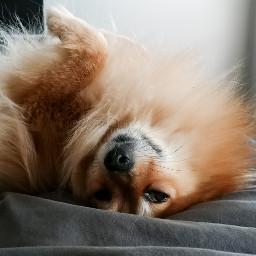 rainyday nap freetoedit
