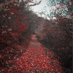 forest trees leafs red picoftheday freetoedit