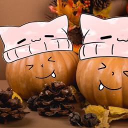 freetoedit pumpkin cat hat emoji