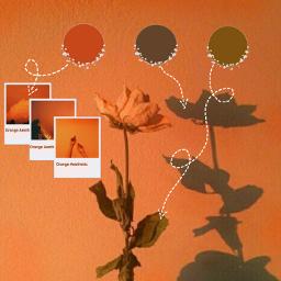 freetoedit orangeaesthetic circles orange arrows ecaesthetic aesthetic