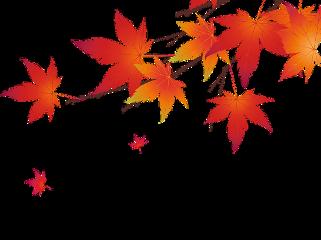 fall autumn autumnleaves november nature freetoedit